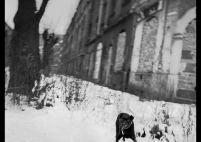 Igor-Dog