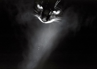 Peter Zupnik, Chat Noir