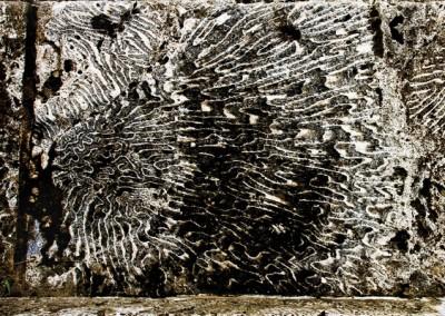 02- Paul Bock -Edit.Porcupine-02