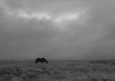 39. Grazing Horse, Haworth Moor, Yorkshire, 1990