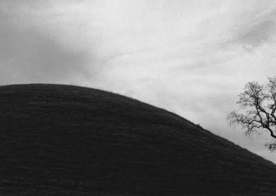43. Tree #22, CA, 1965 - V2 copy