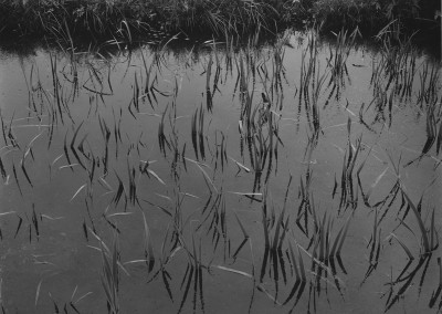 49. Aquatic Plants #4, NJ, 1967 copy