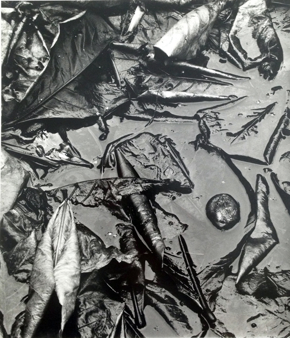 Brett Weston 布雷特·韦斯顿
